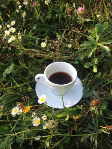 Carpathian coffee