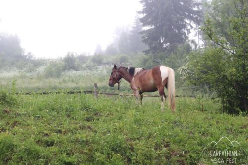 Carpathian Yoga Festival 2018 horse